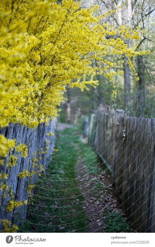 Weg in den Frühling Natur schön Einsamkeit ruhig Wald gelb Umwelt Wiese Leben Gefühle Wege & Pfade Garten Frühling träumen Sträucher einzigartig
