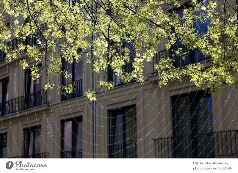Frühling in der Stadt Natur Stadt Pflanze grün schön Baum Blatt ruhig Haus Fenster Architektur Frühling Gebäude Fassade hell Wachstum