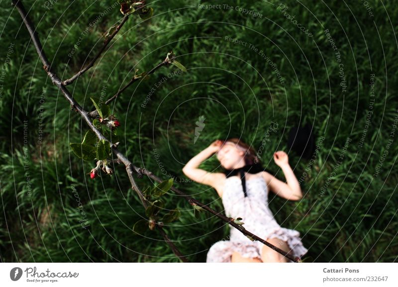 Travel the world and the seven seas feminin Mädchen Junge Frau Jugendliche 1 Mensch Pflanze Gras Ast Blütenknospen Kleid Schleife Hut liegen schlafen träumen