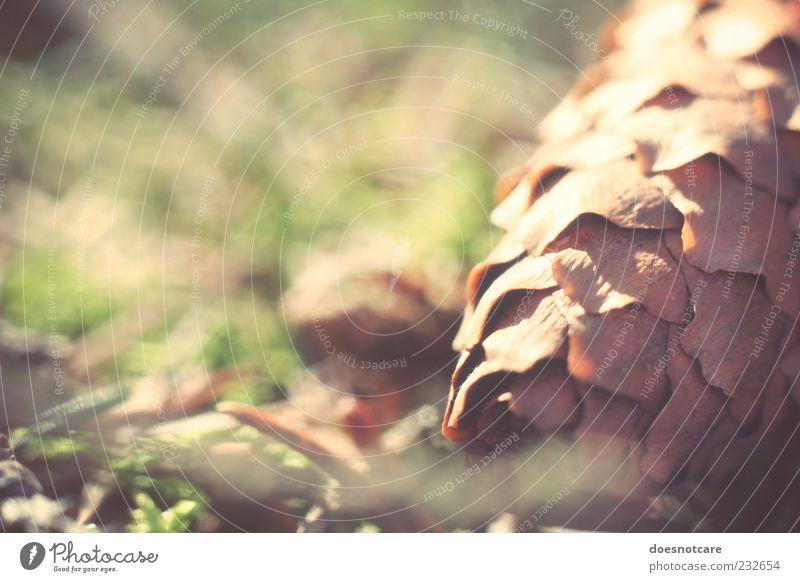 dawn of a new day. Natur liegen nah Waldboden Frucht Tannenzapfen