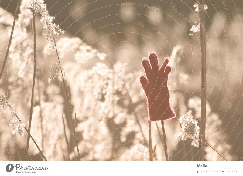 Hands up Umwelt Pflanze Sonnenlicht Gräserblüte Handschuhe Vergänglichkeit verlieren vergessen verloren Fundstück Farbfoto Außenaufnahme Menschenleer Tag Abend