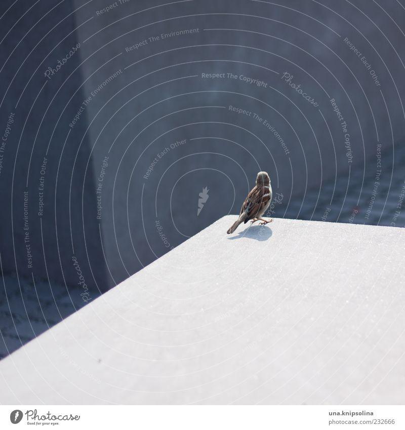 Ein kleiner Spatz wollte den Süden sehen Menschenleer Denkmal Holocaustgedenkstätte Tier Wildtier Vogel 1 eckig sitzen Rückansicht Farbfoto Außenaufnahme Muster