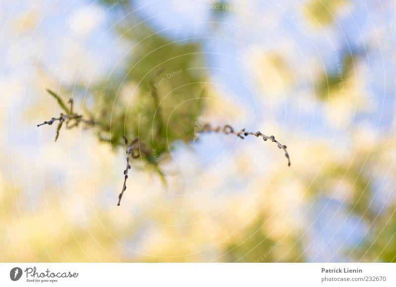 Feel Umwelt Natur Pflanze Luft Himmel Sonnenlicht Frühling Baum Blatt Grünpflanze Wildpflanze frisch schön natürlich weich hängen blau Trieb Farbfoto