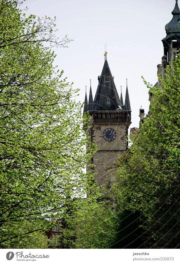 Prager Frühling Tschechien Hauptstadt Altstadt Kirche Bauwerk Architektur Sehenswürdigkeit Wahrzeichen historisch Baum Turm Kirchturmuhr Rathaus Rathausturm