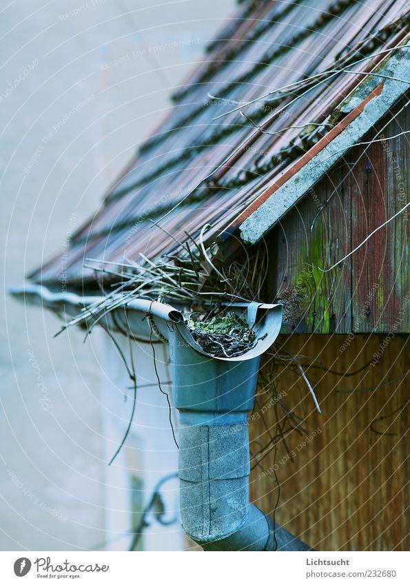 Hexenhaus Unkraut Hütte Architektur Holzwand Dach Dachrinne Giebelseite alt eckig trist blau früher Menschenleer Verfall verfallen Wachstum außergewöhnlich