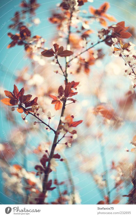 Frühlingsfarben Natur Pflanze Himmel Sonne Sonnenlicht Schönes Wetter Baum Sträucher Blüte Garten Park Holz frisch hell schön natürlich weich mehrfarbig