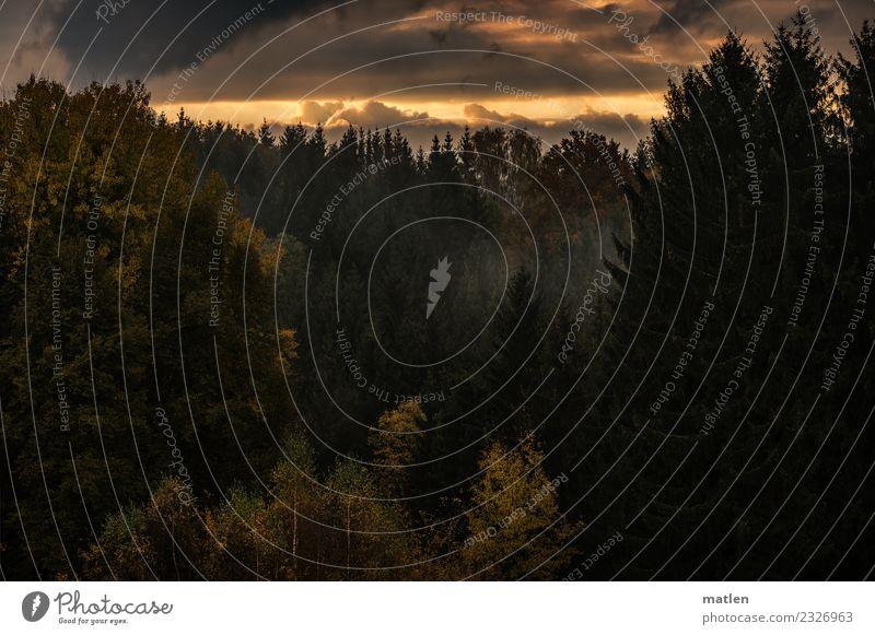 Herbstwald Natur Landschaft Pflanze Himmel Wolken Sonnenaufgang Sonnenuntergang Schönes Wetter Baum Wald Berge u. Gebirge braun gelb grau grün orange Nebelbank