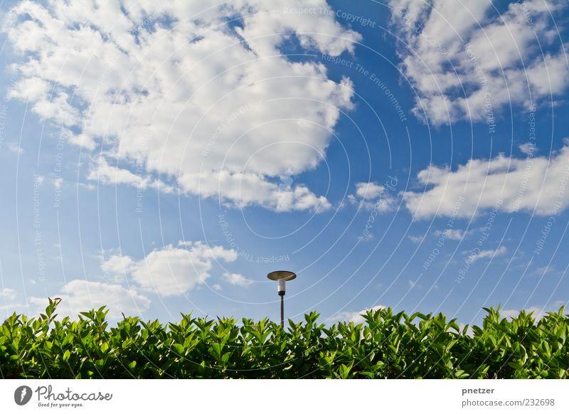 Himmel Hecke Laterne Natur blau grün schön Pflanze Sommer Blatt Wolken Umwelt Frühling Lampe Wetter Klima leuchten Sträucher