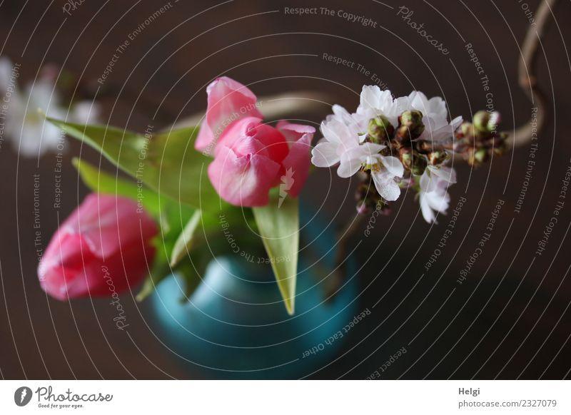 Frühlingsblümchen Pflanze Blume Blatt Blüte Tulpe Zweig Vase Glas Blühend ästhetisch frisch schön einzigartig braun grün türkis weiß Lebensfreude Farbfoto