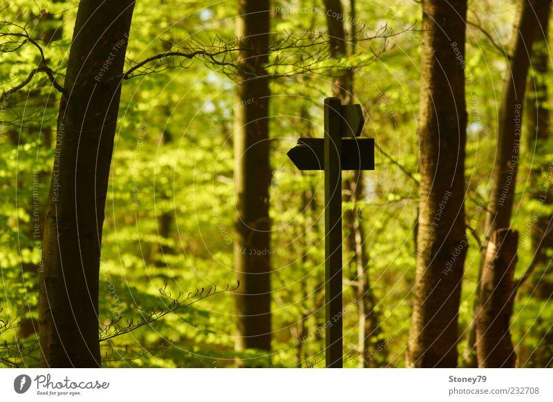 Da geht's zum Frühling Natur Pflanze Baum Blatt Wald Schilder & Markierungen grün Richtung Jahreszeiten Wegweiser Baumstamm Farbfoto Außenaufnahme Menschenleer