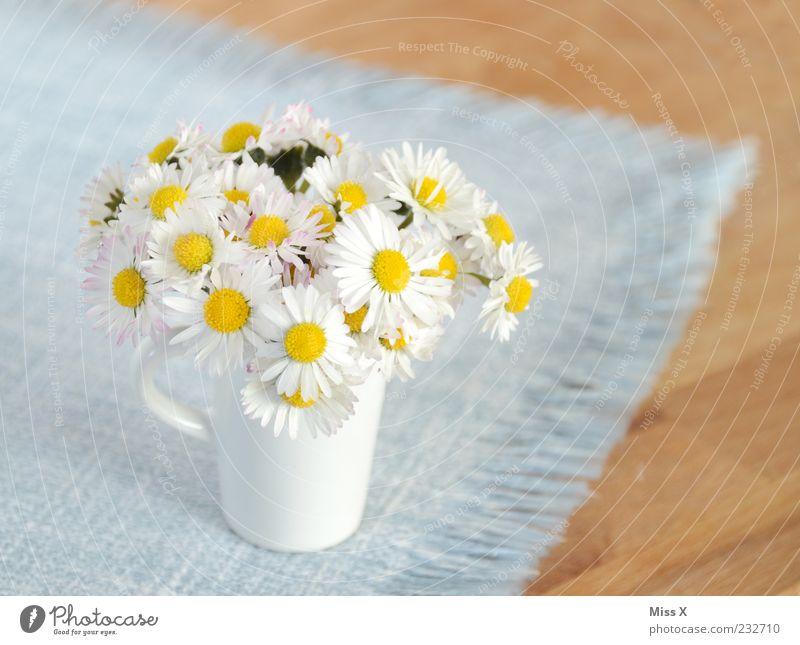 Handgepflückt von Schatzi blau weiß schön Sommer Blume klein Blüte Frühling Dekoration & Verzierung Kitsch Blühend Blumenstrauß Duft Gänseblümchen Vase Tischwäsche