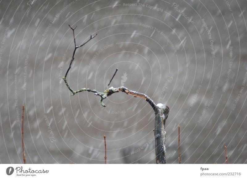 Last Branch Standing Himmel Natur alt Baum Pflanze Winter Umwelt kalt dunkel Schnee grau Luft Schneefall braun Wetter frei