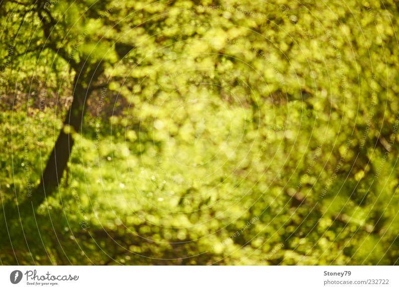 Frühlingsrausch Natur grün Baum Pflanze Blatt wild frisch leuchten Schönes Wetter Jahreszeiten Verwirbelung Frühlingsgefühle Umwelt Morgen