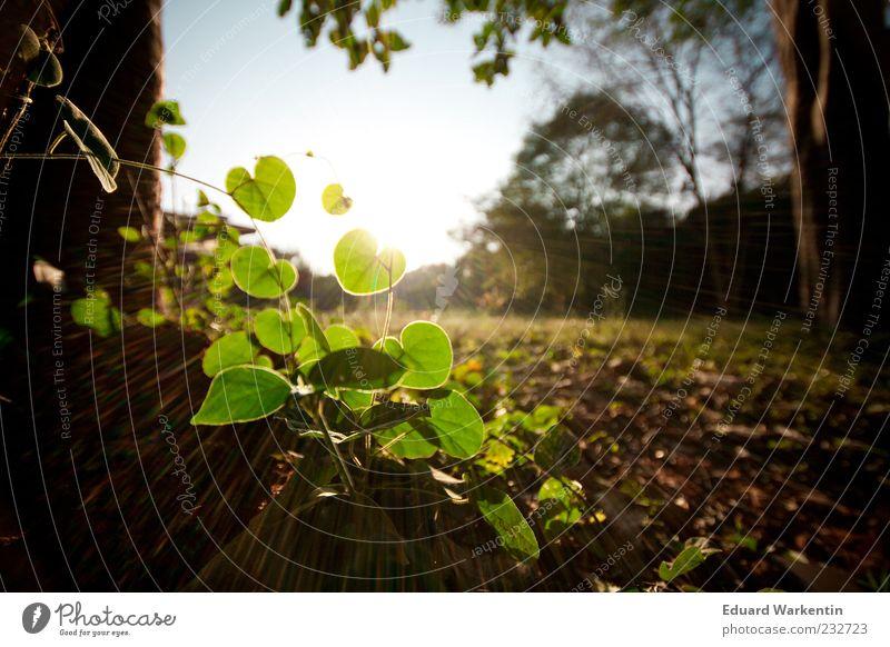 Pflanze Umwelt Natur Landschaft Himmel Sonnenlicht Baum Gras Blatt Grünpflanze Wildpflanze Boden Sonnenstrahlen grün Farbfoto Außenaufnahme Menschenleer Abend