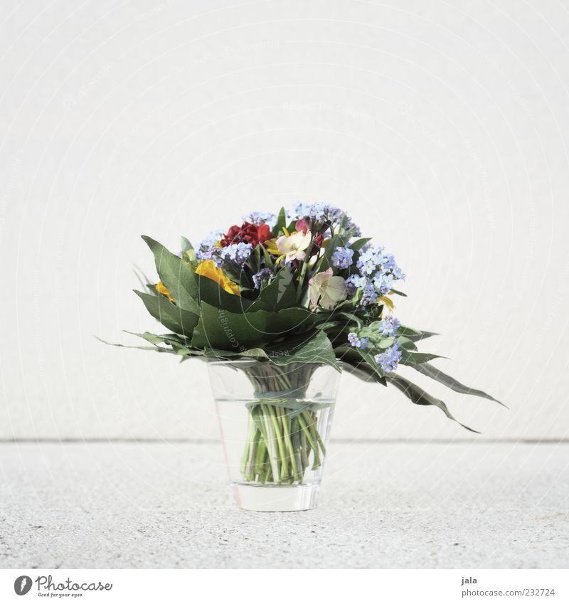 blumenstrauss Pflanze Blume Glas Dekoration & Verzierung Blumenstrauß Vase Frühlingsgefühle