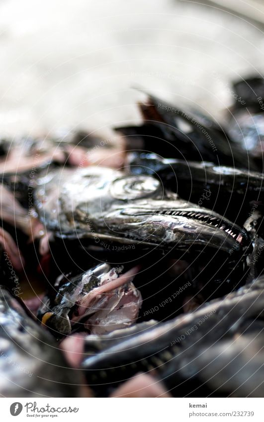 Zähne zeigen Lebensmittel Fisch Meeresfrüchte Tier Totes Tier Tiergesicht Auge Gebiss Degenfisch hässlich Rest Fischabfall Farbfoto Innenaufnahme Nahaufnahme