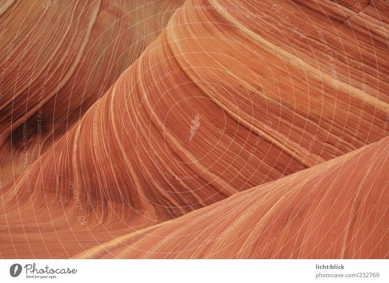 The Wave Natur Hügel Felsen Schlucht Wellen Coyote Buttes Arizona Stein Unendlichkeit trocken braun rot Bewegung Gesteinsformationen Sandstein Farbfoto