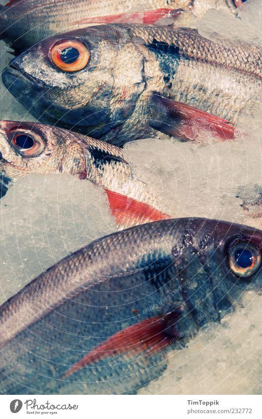 Now, that's a bit fishy... Tier Auge Eis liegen Fisch Tierhaut Tiergesicht Duft bewegungslos Ware kühlen Fischauge Schuppen Eiswürfel Fischmarkt