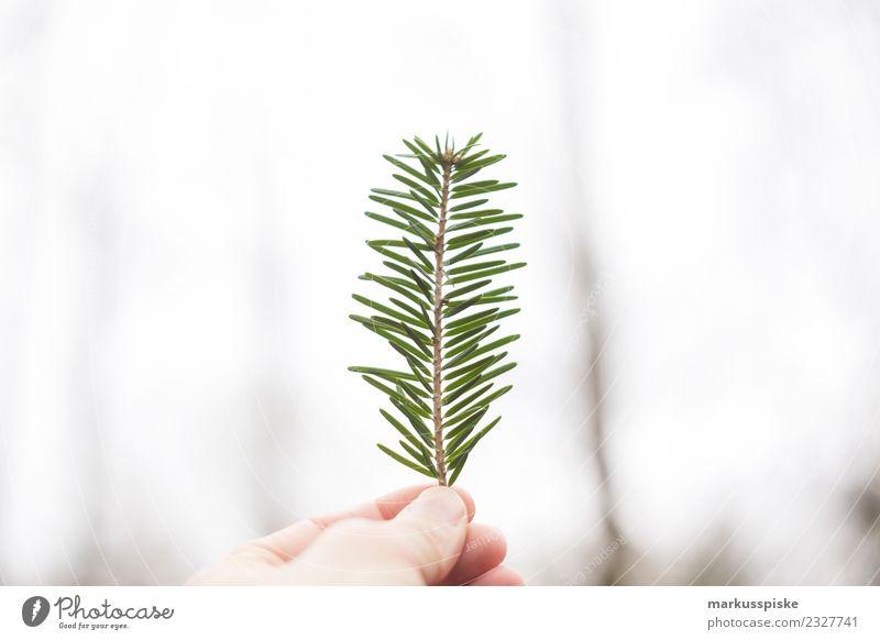 Tannenzweig Hand Natur Ferien & Urlaub & Reisen Pflanze Baum Erholung Blatt ruhig Ferne Wald Umwelt Herbst Blüte Freiheit Ausflug Zufriedenheit
