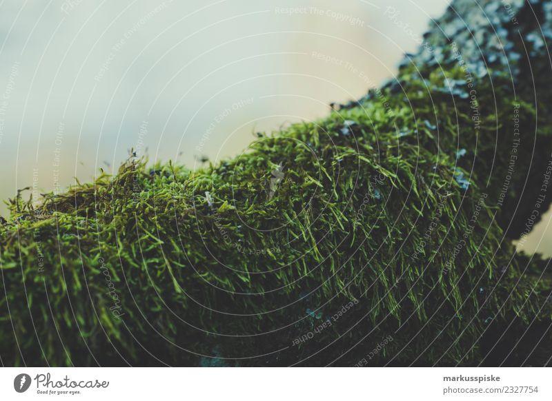 Moos Natur Ferien & Urlaub & Reisen Pflanze grün Landschaft Baum Tier Wald Umwelt Herbst natürlich Garten Ausflug Freizeit & Hobby Wachstum Sträucher