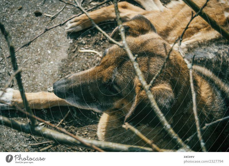 Frau Hund alt Sommer schön Tier Einsamkeit dunkel Gesicht Erwachsene Umwelt Traurigkeit Holz braun oben Freundschaft