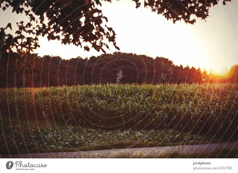 Lonesome Road Natur Baum Ferien & Urlaub & Reisen Pflanze Sonne Sommer Wald Umwelt Landschaft Frühling Feld leuchten fantastisch Schönes Wetter Sonnenlicht