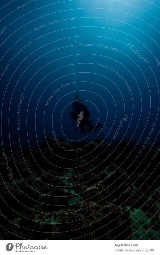 DIVING INTO DARKNESS Natur Ferien & Urlaub & Reisen Meer Einsamkeit ruhig Erholung dunkel natürlich Abenteuer Tourismus Idylle tauchen Luftblase unheimlich