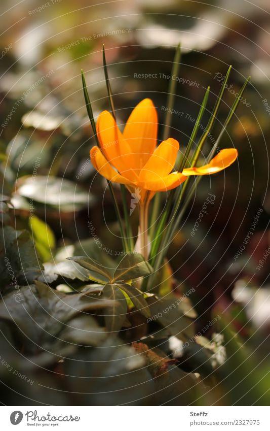 goldener Frühling Natur Pflanze schön grün Blume Blatt Wald Umwelt Blüte Garten orange Park Beginn Blühend Vorfreude