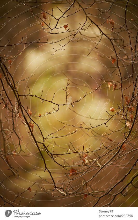 Zweige Natur Pflanze Baum Blatt braun ruhig Sehnsucht Durchblick Rahmen filigran Farbfoto Gedeckte Farben Außenaufnahme Detailaufnahme Menschenleer