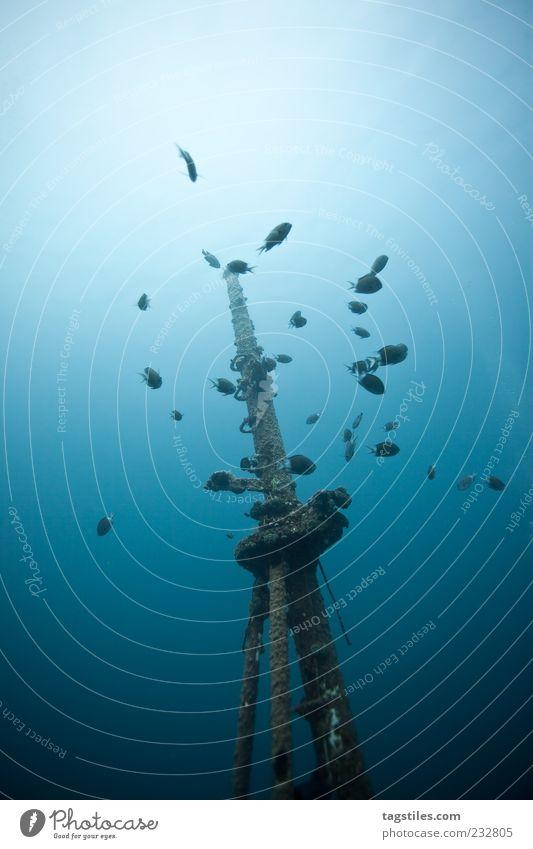 MAST- UND SCHOTBRUCH Natur blau Ferien & Urlaub & Reisen Meer Erholung Wasserfahrzeug Fisch Reisefotografie geheimnisvoll tauchen entdecken tief gebrochen Mast