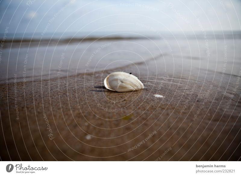 tag am meer #7 Landschaft Sand Wasser Schönes Wetter Wellen Küste Strand Ostsee Meer Muschel 1 Tier ruhig Farbfoto Außenaufnahme Menschenleer Tag