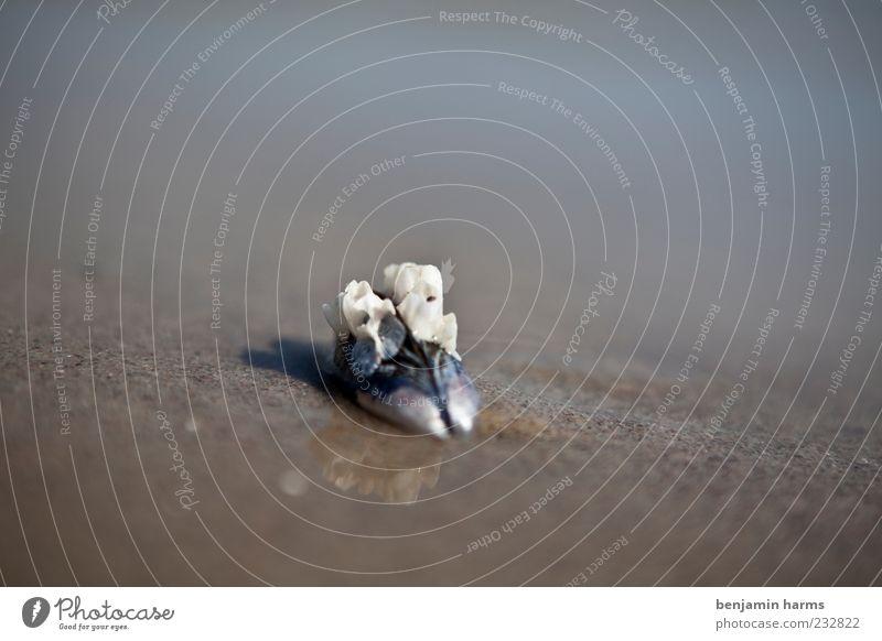 tag am meer #8 Natur Landschaft Sand Wasser Küste Strand Ostsee Meer Muschel 1 Tier ruhig Farbfoto Außenaufnahme Menschenleer Tag Schwache Tiefenschärfe
