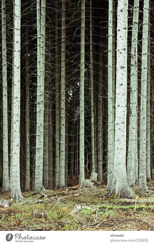 Sauerland Umwelt Natur Pflanze Erde Baum Wald Holz Sorge Sehnsucht Einsamkeit Wachstum ausweglos Hoffnungslosigkeit Farbfoto Außenaufnahme Muster Menschenleer