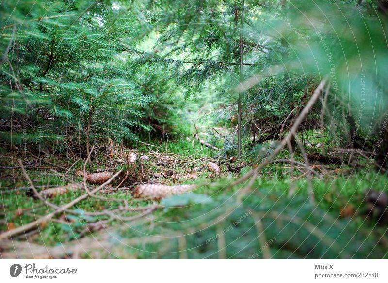 Wir vermissen dich ! Natur Sommer Herbst Pflanze Baum Sträucher Blatt Wald Wachstum grün Waldboden Umwelt Zapfen Fichtenwald Ast Zweig Nadelwald Tannennadel