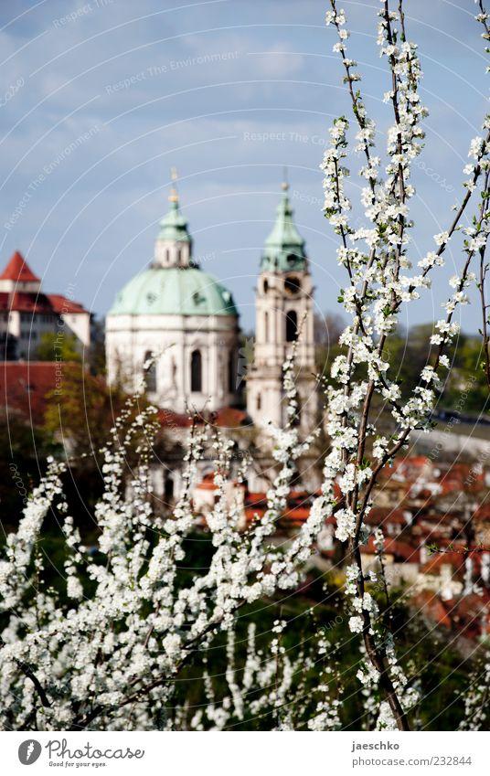 Prager Frühling VIII Pflanze Baum Blüte Hauptstadt Stadtrand Kirche Blühend Kuppeldach Kirschbaum Kirschblüten Frühlingstag Religion & Glaube