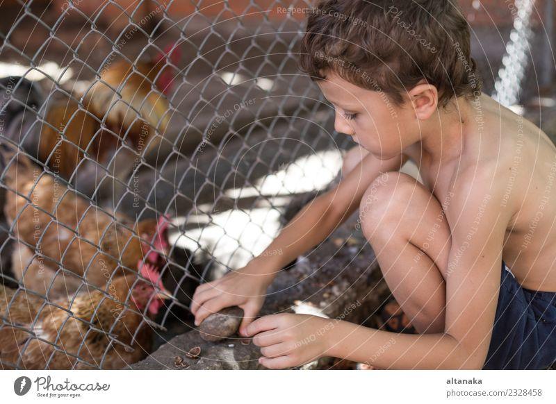 Kleiner Junge sitzt mit Bauernhühnern zusammen. Freude Glück schön Spielen Sommer Haus Kind Mensch Baby Mann Erwachsene Kindheit Natur Tier Haustier Vogel