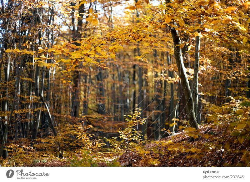 Goldener Herbst Natur schön Baum Blatt Einsamkeit ruhig Wald Erholung Umwelt Landschaft Leben Freiheit Wege & Pfade träumen Zeit
