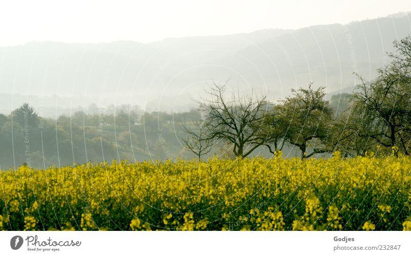 Im Tal der Nebel Ausflug wandern Umwelt Natur Landschaft Pflanze Himmel Sonnenlicht Frühling Schönes Wetter Baum Blüte Grünpflanze Nutzpflanze Wiese Feld Wald