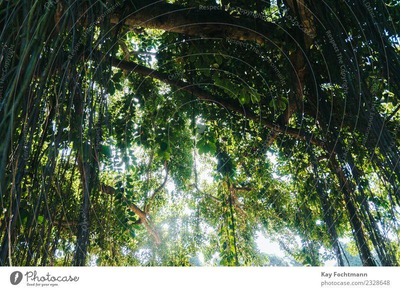 Atlantischer Regenwald in Brasilien harmonisch Erholung Ferien & Urlaub & Reisen Tourismus Ausflug Abenteuer Expedition Sommer Sommerurlaub Sonne wandern Umwelt