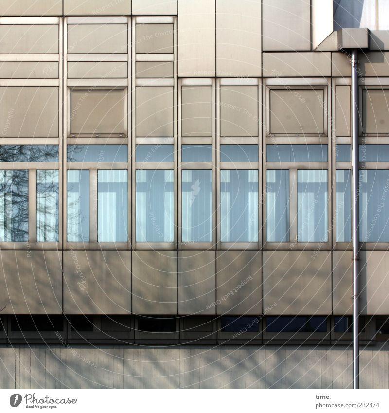 Berliner Grau mit Fallrohr Haus Fassade Fenster eckig Fensterscheibe Rechteck Zweig Fensterfront Textfreiraum oben Farbfoto Gedeckte Farben Außenaufnahme Muster