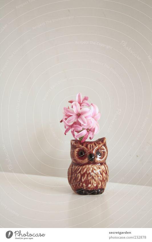 frohe ostern euch! weiß Pflanze Wand klein Blüte braun Feste & Feiern Wohnung rosa ästhetisch Tisch Dekoration & Verzierung stehen niedlich Kitsch Blühend