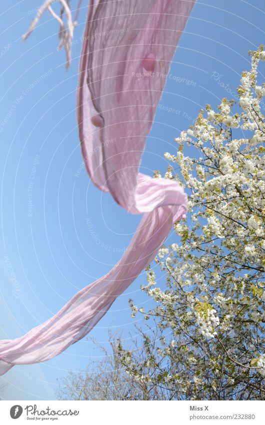 Welle Baum Freiheit Garten Frühling Luft Park Wind rosa fliegen Schönes Wetter Blühend Baumkrone wehen Schal Tuch Blauer Himmel