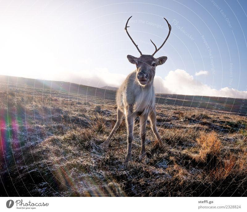 Pinkelpause Natur Ferien & Urlaub & Reisen Weihnachten & Advent Landschaft Tier Winter Berge u. Gebirge Umwelt Herbst Freiheit Ausflug wandern Feld Eis Wildtier
