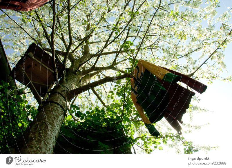 Kleider in Blüte ruhig Natur Pflanze Himmel Frühling Baum Kirschbaum Futterhäuschen Hemd Holz frisch Frühlingsgefühle Farbfoto Außenaufnahme Menschenleer Tag