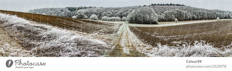 Winter in Mittelhessen Ferne Natur Landschaft Wetter Eis Frost Baum Feld Wald Schneebedeckte Gipfel Menschenleer Wege & Pfade ästhetisch kalt lang Zufriedenheit