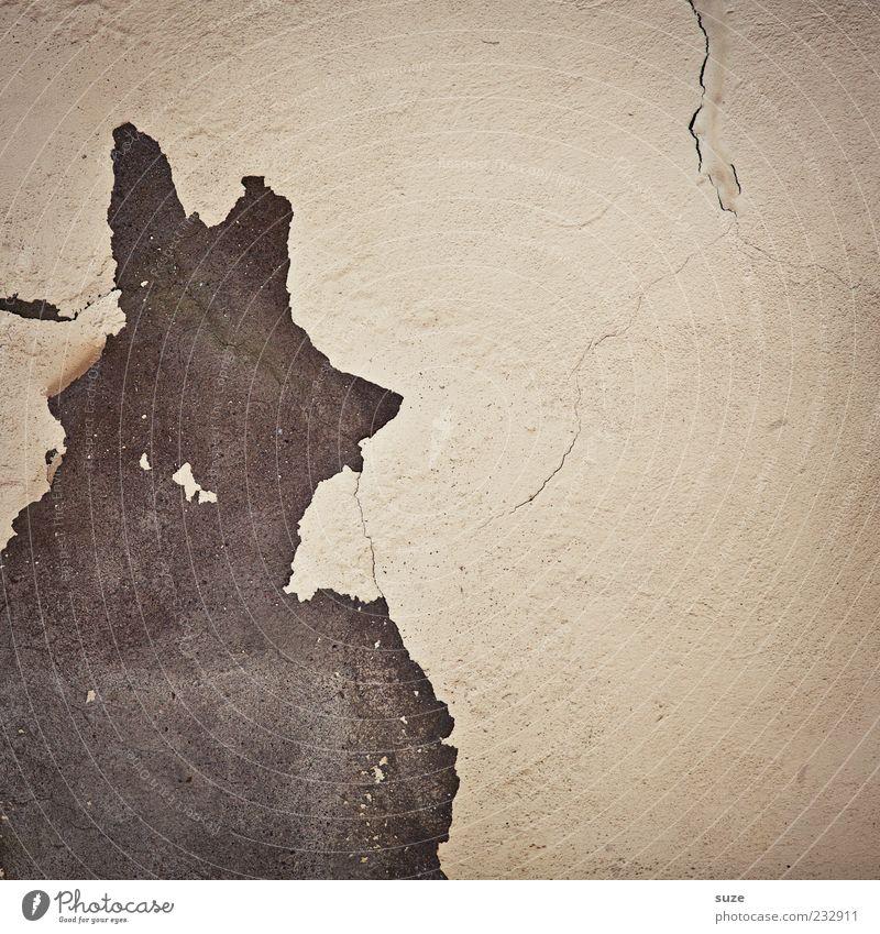 KV* Gebäude Mauer Wand Fassade Tier alt authentisch eckig einfach kaputt lustig trist trocken Verfall Vergangenheit Vergänglichkeit Putz Zahn der Zeit Riss