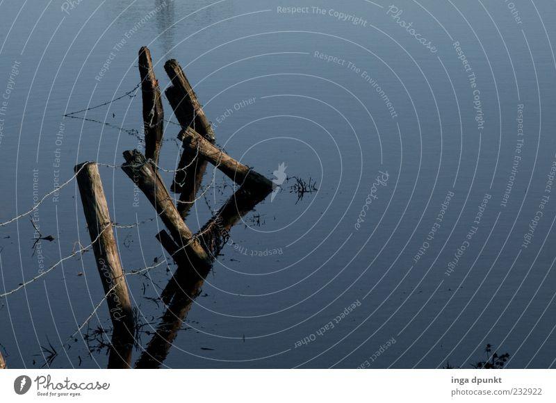Stille Wasser... ruhig Umwelt Natur Seeufer Flussufer Flußauen Auenland Zaun Zaunpfahl Stacheldraht Stacheldrahtzaun Holz Außenaufnahme Menschenleer