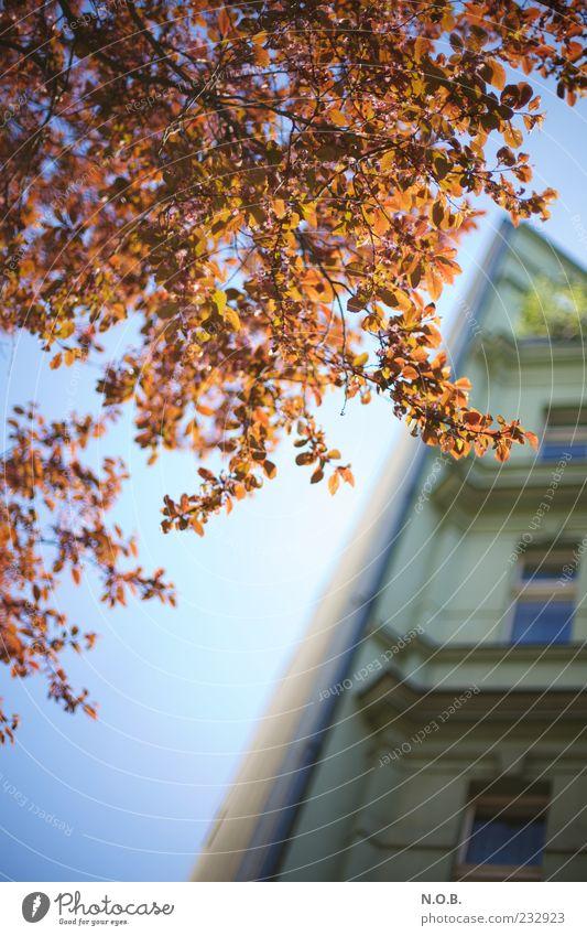 Urban Color Baum Haus Frühling Fassade ästhetisch Schönes Wetter Gebäude