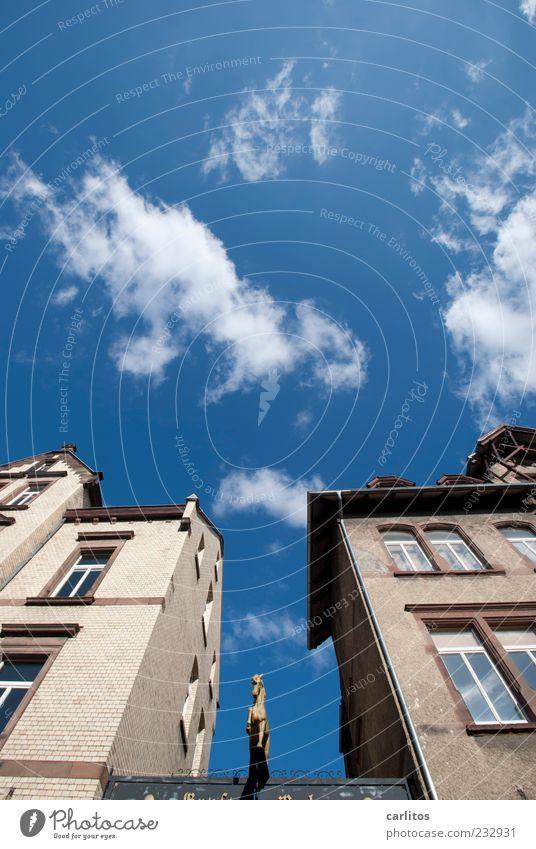 Das goldene Kalb ist ein Pferd Himmel blau alt Stadt Wolken Haus Fenster Wand Architektur Mauer Fassade Schönes Wetter Perspektive ästhetisch Dach