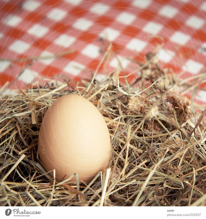 Landei Lebensmittel Ei Hühnerei Bioprodukte Vegetarische Ernährung Ostern warten Nest Stroh Heu Landleben frisch kariert Farbfoto mehrfarbig Innenaufnahme